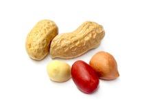 Frische Erdnüsse Stockfotos