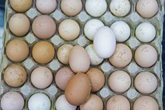 Frische erfasste Eier und markiert stockbilder