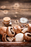 Frische essbare Pilze stockfotos