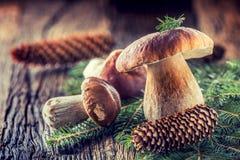 Frische essbare Pilze des Boletus mit geziertem Bündel und Kegel auf rustikalem woden Tabelle Stockfotos