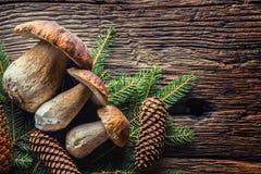 Frische essbare Pilze des Boletus mit geziertem Bündel und Kegel auf rustikalem woden Tabelle Lizenzfreie Stockfotos