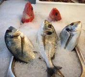 Frische Fische 3 Lizenzfreies Stockfoto