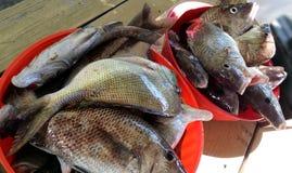 Frische Fische lizenzfreies stockfoto