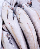 Frische Fische lizenzfreie stockfotos