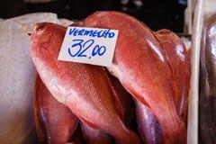 Frische Fische Stockbild