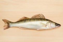 Frische Fische Lizenzfreies Stockbild