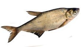 Frische Fische (Abramis ballerus) Lizenzfreies Stockfoto