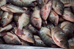 Frische Fische auf dem Markt Lizenzfreie Stockfotos