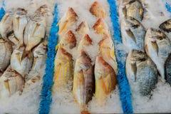 Frische Fische auf dem Zähler an einem Fischspeicher Lizenzfreie Stockfotos
