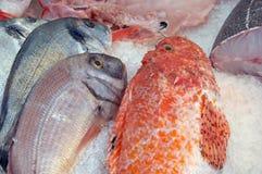 Frische Fische auf Eis stockfoto