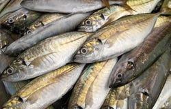 Frische Fische auf Eis Stockfotos