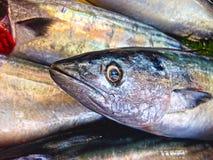 Frische Fische auf Eis auf dem Markt Lizenzfreie Stockfotos