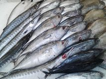 Frische Fische auf Eis auf dem Markt eisgekühlte Hechtdorsche auf einem Fisch Auf Lizenzfreies Stockfoto