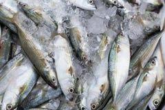 Frische Fische auf Fischmarkt Stockfotografie