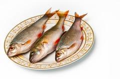Frische Fische auf Platte Stockbilder