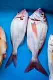 Frische Fische auf Tabelle Stockfotografie