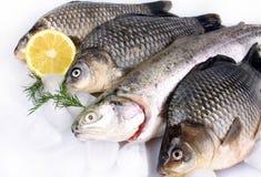 Frische Fische auf weißem Hintergrund mit Eis und Zitrone Lizenzfreie Stockfotografie