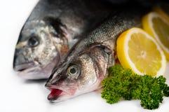 Frische Fische der Meeresfrüchte - im weißen Hintergrund stockfoto