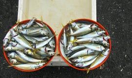 Frische Fische in der Türkei Lizenzfreie Stockbilder