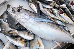 Frische Fische - der Thunfisch Lizenzfreies Stockfoto