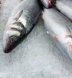 Frische Fische des Haufens Stockfotos