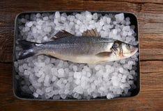Frische Fische des Seebarsches auf Eis und Holz Stockbild