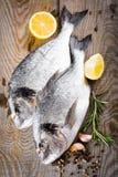 Frische Fische dorado Lizenzfreie Stockfotos