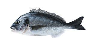 Frische Fische dorado Seebrassen lokalisiert auf weißem Hintergrund Lizenzfreies Stockfoto