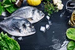 Frische Fische dorado würziges Kraut Draufsicht Stockbilder