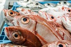 Frische Fische an einem Fischshop Lizenzfreies Stockfoto