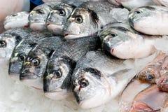 Frische Fische an einem Fischshop Stockfoto