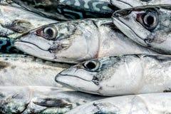 Frische Fische an einem Fischshop Stockfotografie