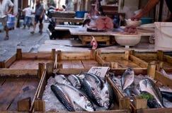 Frische Fische an einem italienischen Markt Stockbilder