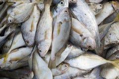 Frische Fische in einem Korb. Stockfotografie