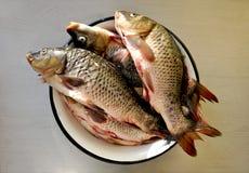 Frische Fische in einer Schüssel Stockbilder
