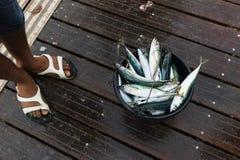 Frische Fische in einer Wanne lizenzfreies stockfoto