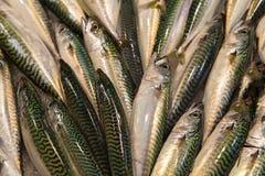 Frische Fische am Fischmarkt Stockfoto