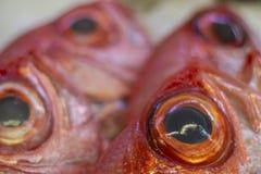 Frische Fische am Fischmarkt, Fische auf Anzeige lizenzfreies stockbild