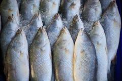 Frische Fische im Frischmarkt Lizenzfreies Stockbild