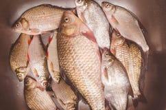 Frische Fische liegen in der Wanne, bevor sie ausweiden und säubern Stockbild