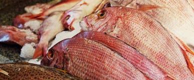 Frische Fische am Markt lizenzfreies stockfoto