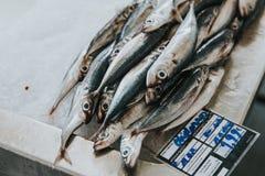 Frische Fische am Markt Stockbilder