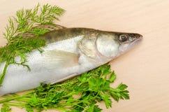 Frische Fische mit Kräutern Stockfoto