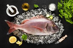 Frische Fische und Bestandteile des roten Goldbrassens Lizenzfreie Stockfotos