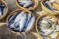 Frische Fische und Thunfisch im Korb auf dem Strand Stockbilder