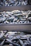 Frische Fische vom Schwarzen Meer Lizenzfreie Stockbilder