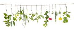 Frische flovouring Kräuter und essbare Blumen, die an einer Schnur, vor interieur backgroung hängen Lizenzfreies Stockbild