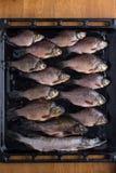 Frische Flussfische Lizenzfreie Stockfotografie