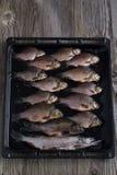 Frische Flussfische Stockbild
