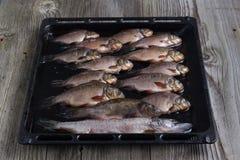 Frische Flussfische Lizenzfreie Stockbilder